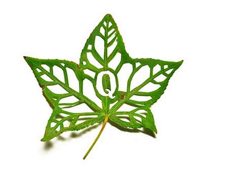 Cut-Leaf-Typography_4
