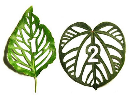Cut-Leaf-Typography_1