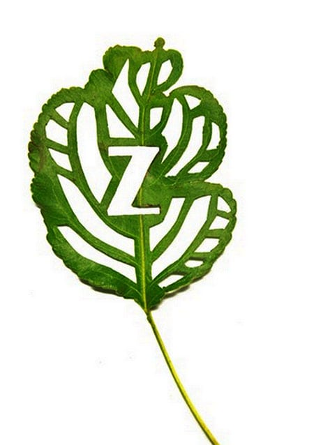 Cut-Leaf-Typography_5