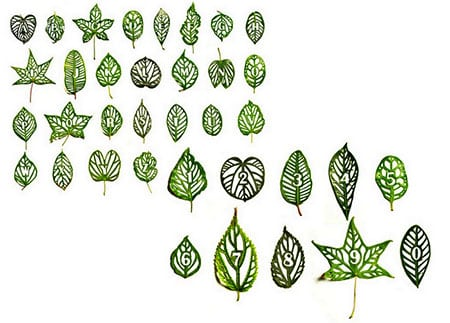 Cut-Leaf-Typography_6